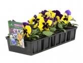 Distribution des barquettes de fleurs